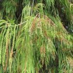 Die Zweige