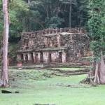 Yaxchilan - Einer der Tempel mitten im Dschungel