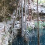 Cenote X'Canchè - Hier trinken die Bäume