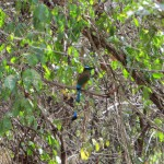 Ein kleiner, bunter Vogel