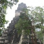 Tikal - Hauptpyramide