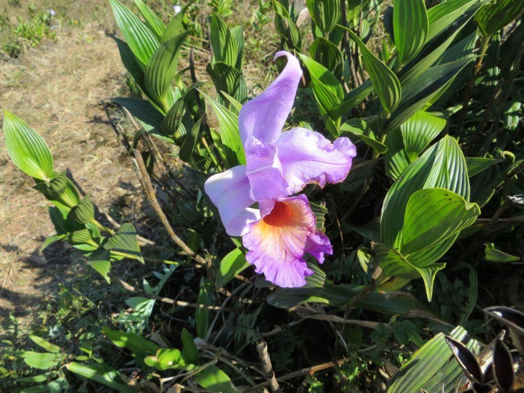 035-18 Orchidee