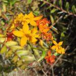 Mehr Orchideen