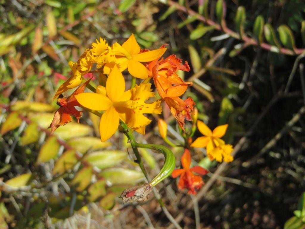 035-19 Mehr Orchideen