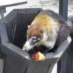 Bio-Müllbeseitigung