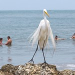 Cartagena - Angeber