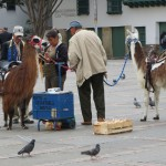 Bogota - Bereit zum Fototermin