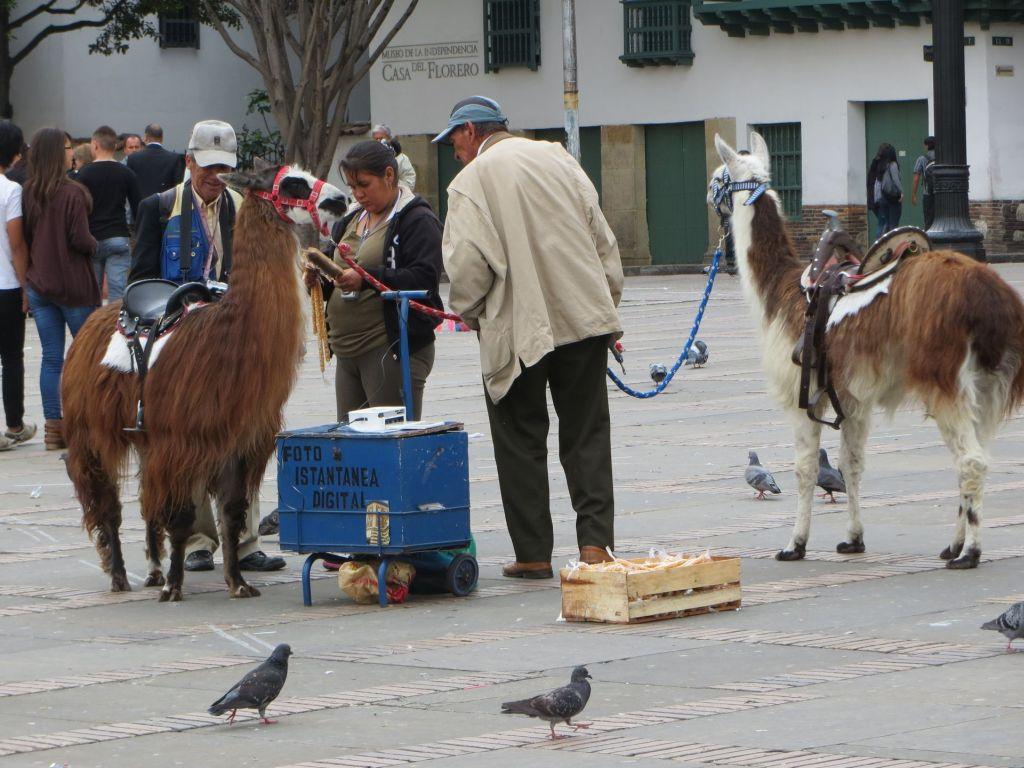 038-26 Bogota - Bereit zum Fototermin