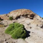 Die östlichen Kordillieren - Lavaformationen, gelegentlich mit Moosen bewachsen