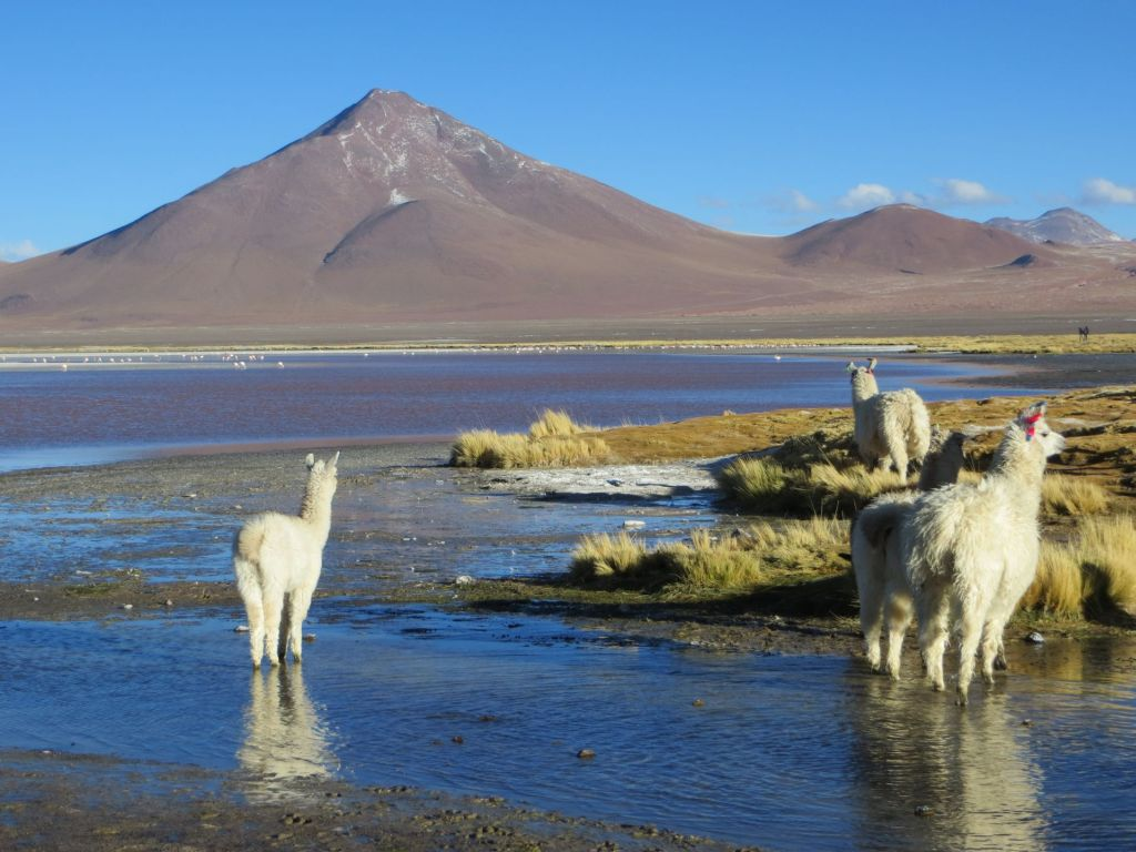 039-40 La Laguna Colorada