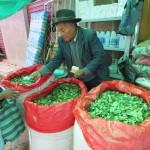 Verkauf von getrockneten Coca-Blättern, gut gegen Kälte, Hunger und Müdigkeit