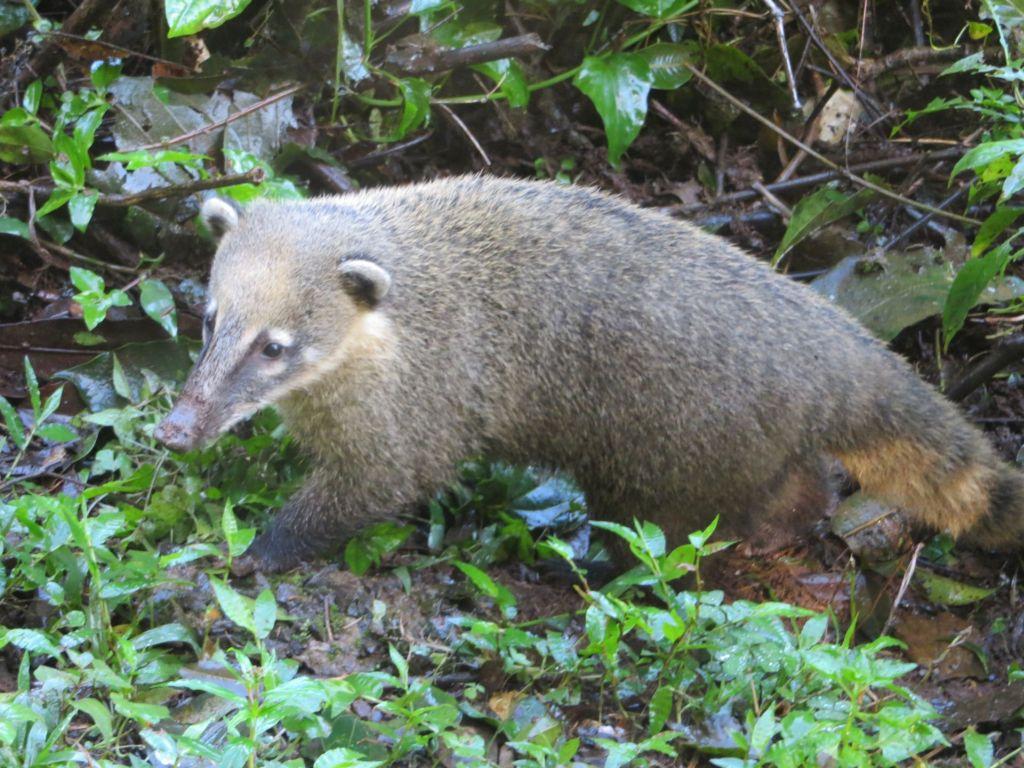 040-03 Hier wohnen auch die Nasenbären