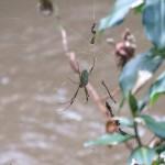 040-12 Mit vielen Spinnen