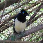 040-13 Und bunten Vögeln